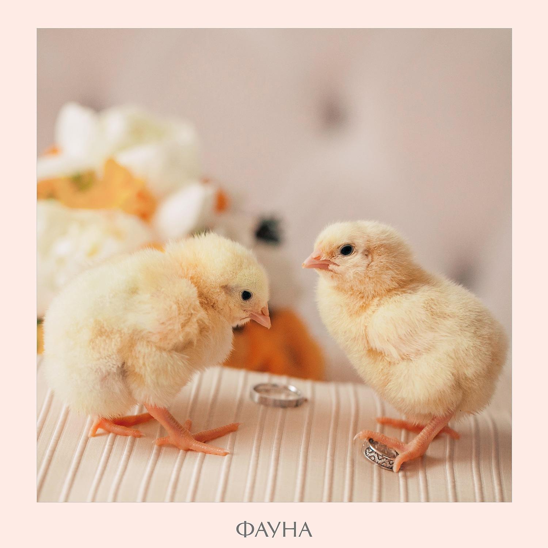 animals_02