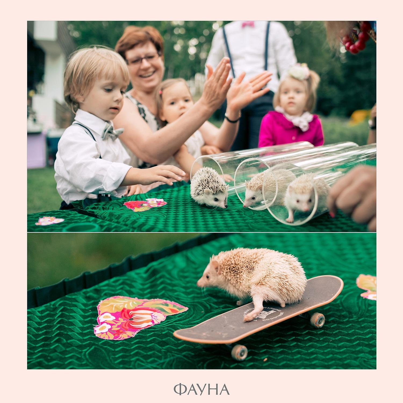 animals_04