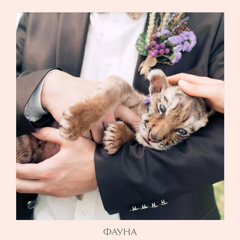 animals_05