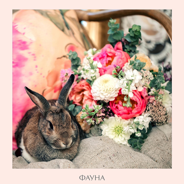 animals_09